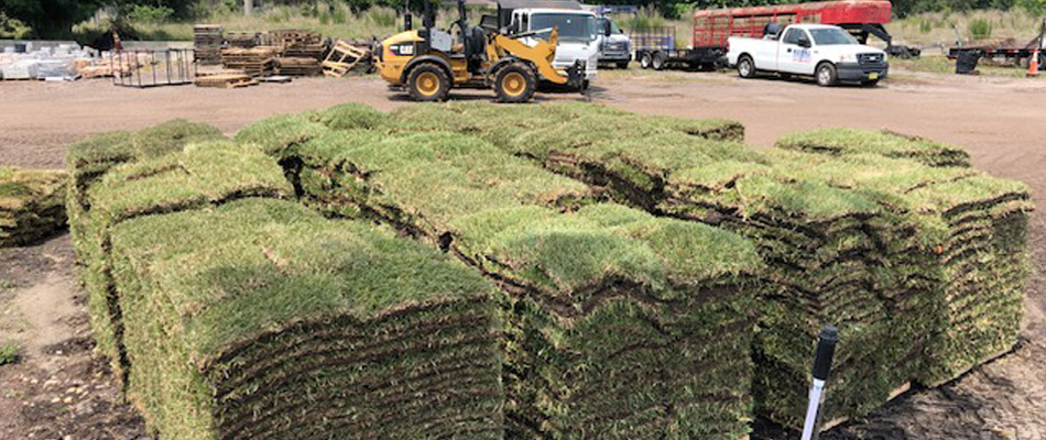 Sod vs. Seeding: Which Is Best for Your Property?
