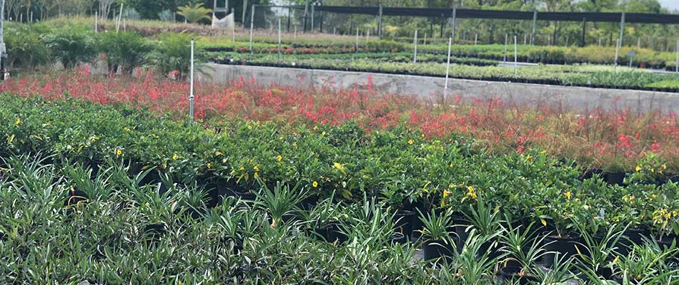 Our landscape nursery, located close to Winter Park, FL.